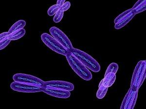 1-chromosomes-artwork-sciepro